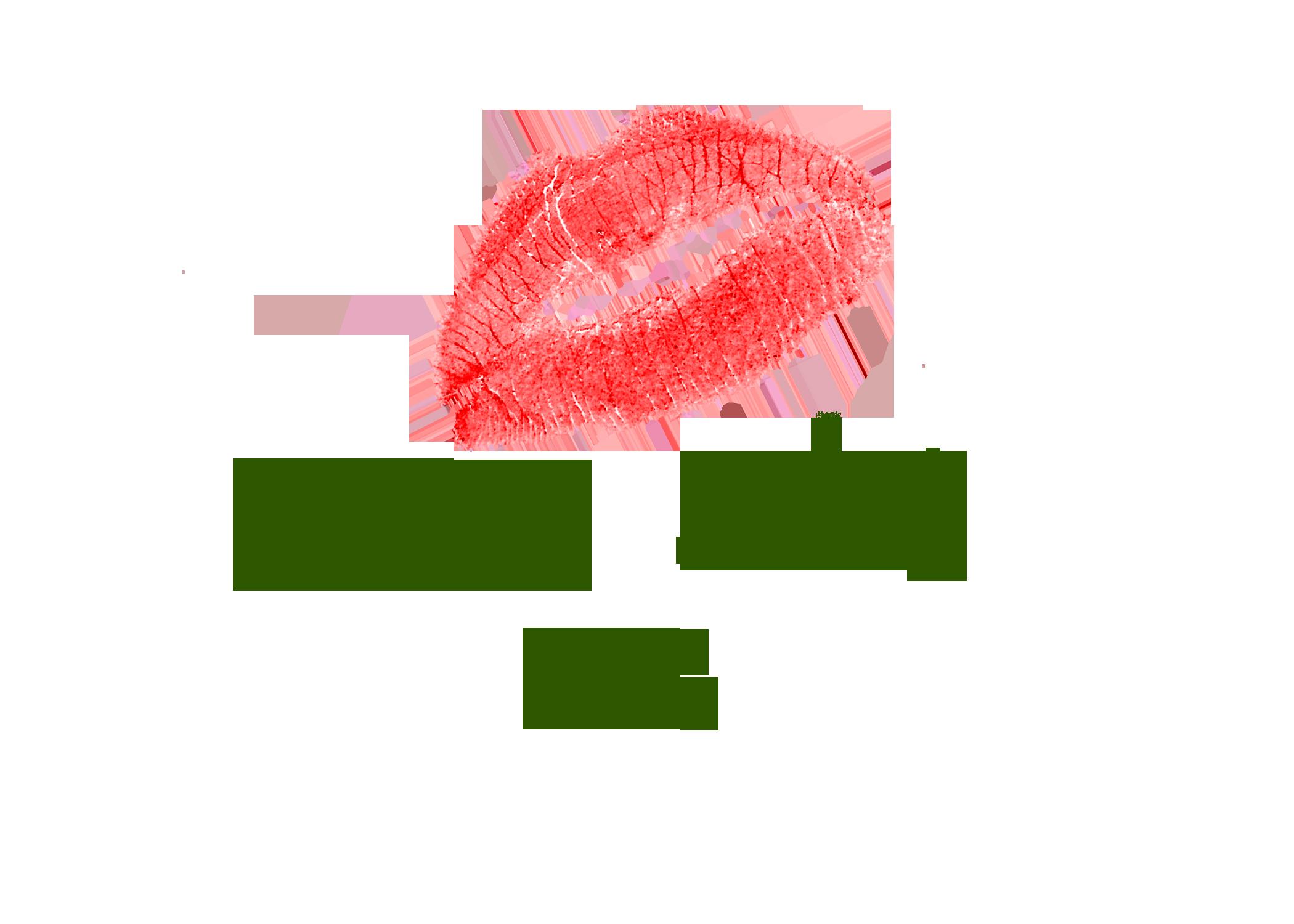 Badass Bitch PR